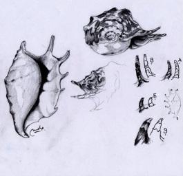 Caracol - Estudio - Lápiz