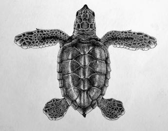 Neonato Tortuga Carey (Eretmochelys imbricata) - Puntillismo - Tinta