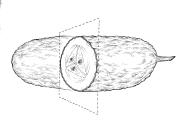 Martin-mak-ilustracion (2)